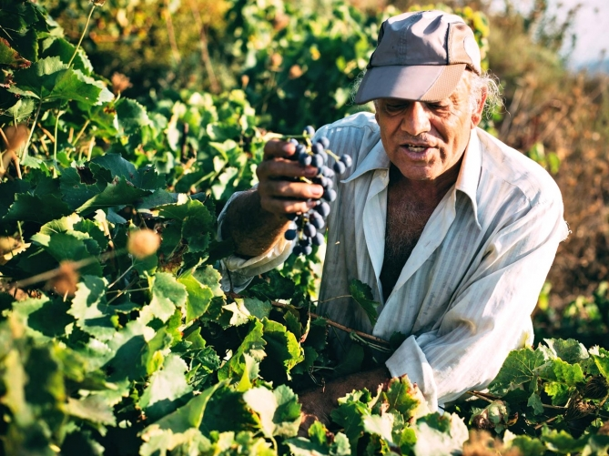 Winery16